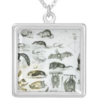 Cheiroptera, Insectivora Silver Plated Necklace