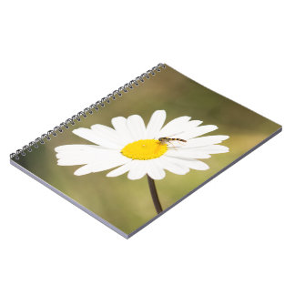 Chequered Hoverfly Notebook