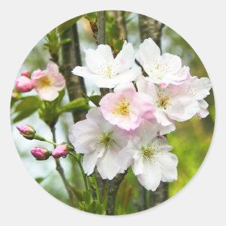 Cherry blossom 4 classic round sticker