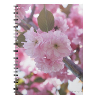 Cherry Blossom 4 Notebooks
