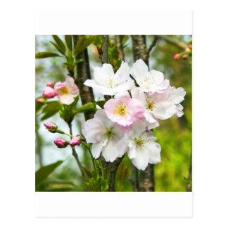 Cherry blossom 4 post cards