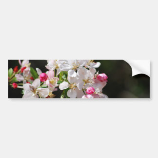 Cherry blossom and meaning bumper sticker