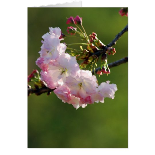 Cherry blossom and meaning card