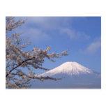 Cherry Blossom and Mt. Fuji 2