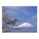 Cherry Blossom and Mt. Fuji 2 Postcard
