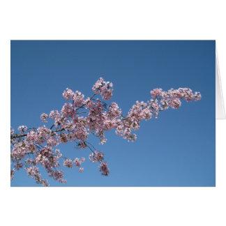 Cherry Blossom Blank Greeting Card
