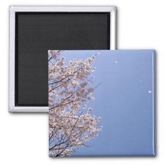 Cherry blossom blizzard Hanafubuki Fridge Magnet