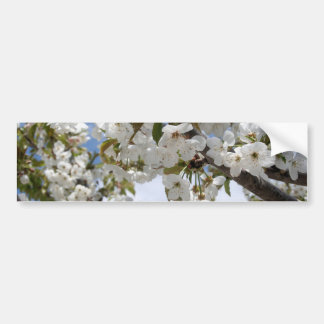 Cherry Blossom Blooms Bumper Stickers