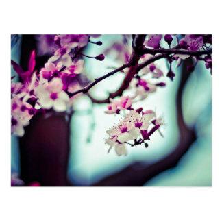 Cherry Blossom Branch Postcard
