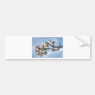 Cherry blossom bumper sticker