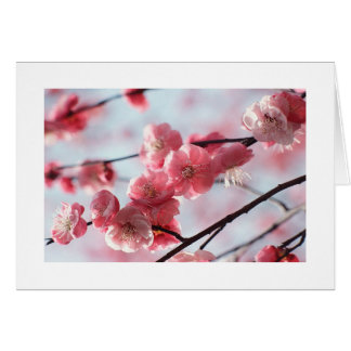Cherry Blossom Card For any Occasion