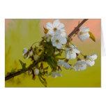 Cherry Blossom Cards
