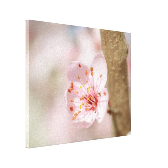 Cherry Blossom Flower Branch Nature Photo Canvas Print