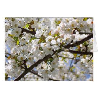 Cherry Blossom III note card