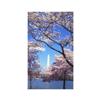 Cherry blossom in Washington DC Canvas Print