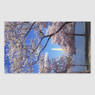 Cherry blossom in Washington DC Rectangle Sticker