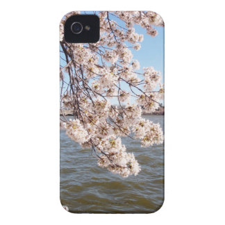 Cherry Blossom iPod Case iPhone 4 Cases