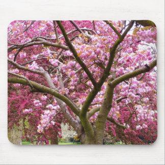 Cherry Blossom Mousepads