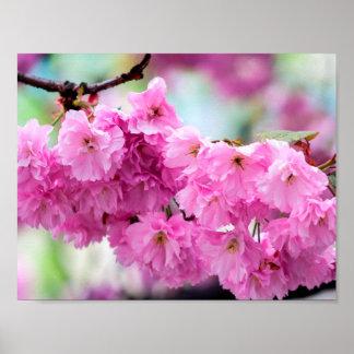 Cherry Blossom Sakura Poster