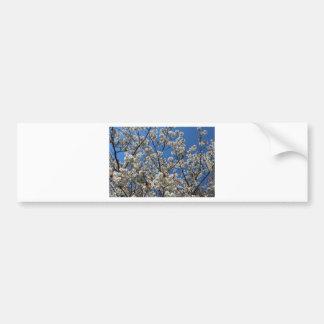 Cherry blossom sky bumper sticker