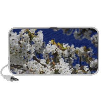 Cherry Blossom Laptop Speakers