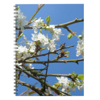 Cherry Blossom Spiral Note Book