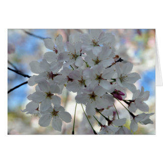 Cherry Blossom Springtime Greeting Card