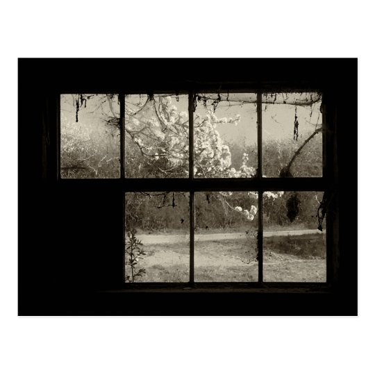 Cherry Blossom through an Old Barn Window Postcard