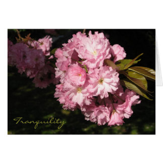 Cherry Blossom Tranquility Blank Card