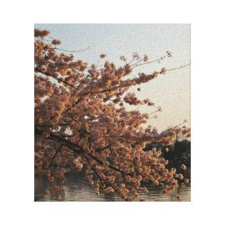 Cherry Blossom Tree Canvas
