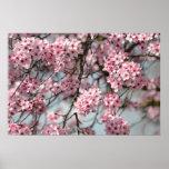 Cherry Blossom Tree Poster