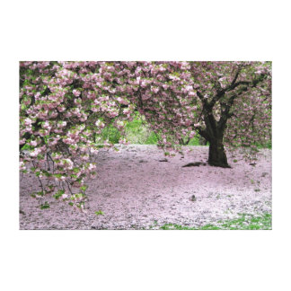 cherry blossom tree wrapped canvas