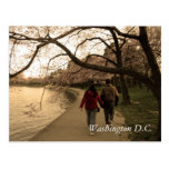 Cherry Blossom Walk Postcard