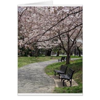 Cherry Blossom Washington DC Cards