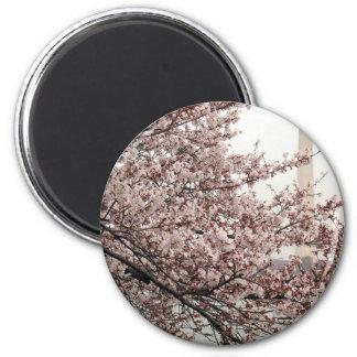 Cherry Blossom Washington DC Fridge Magnets