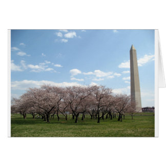 cherry blossom Washington dc Greeting Card