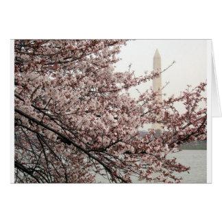 Cherry Blossom Washington DC Greeting Cards