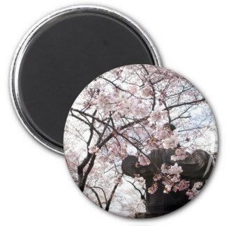 Cherry Blossom Washington DC Magnet
