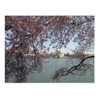 Cherry Blossom Washington DC Post Cards