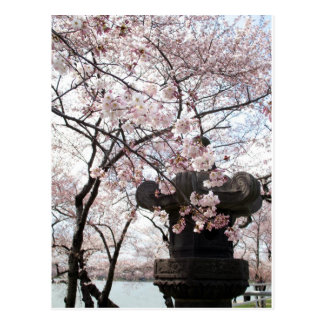 Cherry Blossom Washington DC Postcards