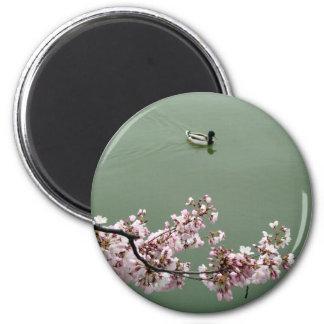 Cherry Blossom Washington DC Refrigerator Magnet