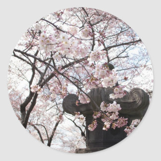 Cherry Blossom Washington DC Stickers