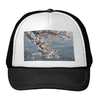 Cherry Blossom Washington DC Trucker Hats