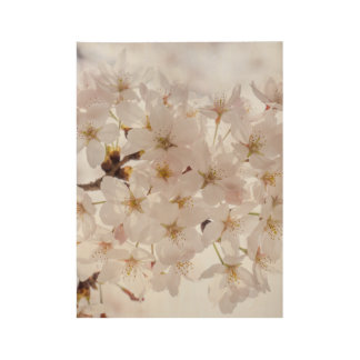 Cherry Blossom Wood Poster