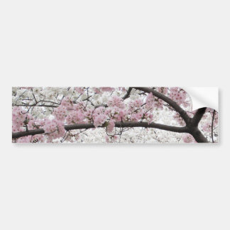 Cherry Blossoms 10 Bumper Sticker