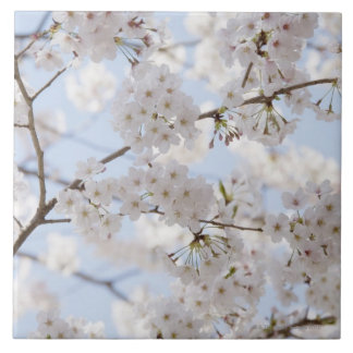 Cherry blossoms 2 tile