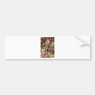 Cherry Blossoms 4 Bumper Sticker