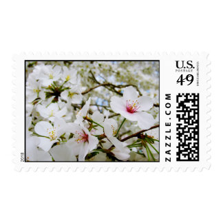 Cherry Blossoms 5 Postage Stamp