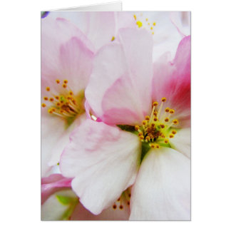 Cherry Blossoms 8 Blank Greeting Card