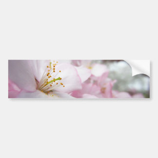Cherry Blossoms 9 Bumper Sticker